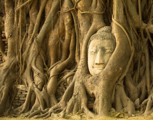 Kopf des Buddhas im Wat Mahathat