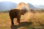 Elefantenparks und Schutz der Dickhäuter