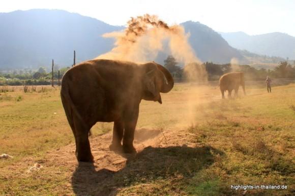 Elefant im Elephan Nature Park