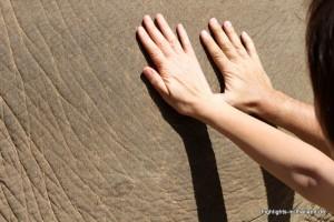 Die Haut des Elefanten